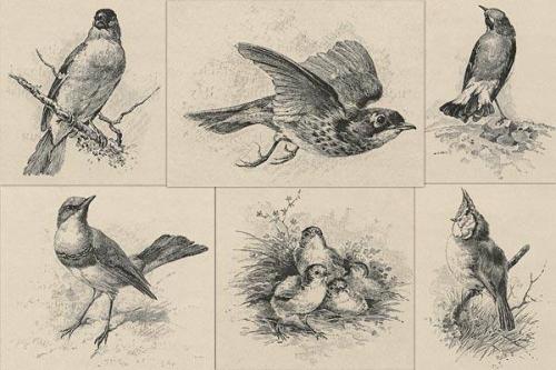 iannagoskibirds